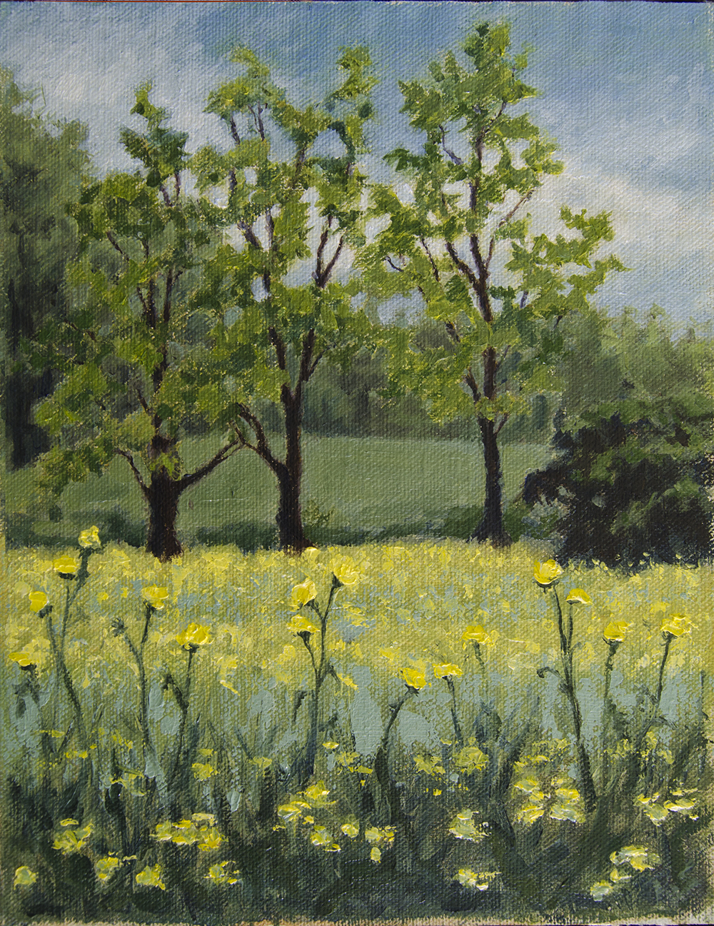Yellow Flowers And Trees April 2016 Rachel Steely